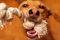 The best dog toys