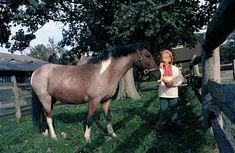 "KN-C29982. Caroline Kennedy Feeds Pony, ""Macaroni,"" at Hammersmith Farm - John F. Kennedy Presidential Library & Museum"