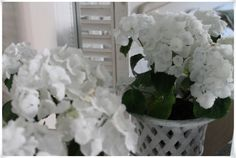 Hortensia, do I have to say somthing more:) Lovely.