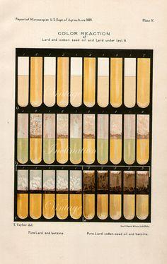 Antique Science Print, COLOR REACTION test tube Chart 1889 wall art vintage color lithograph illustration scientific