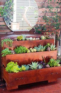 Plants in Dresser