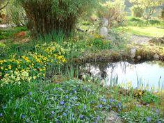 Hermine Paulic: Frühling 2016 beim verlandeten Teich