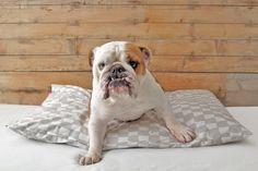 NEW! Designer Dog Bed Cover - Grey & White Motif Pet Bed charliebegood
