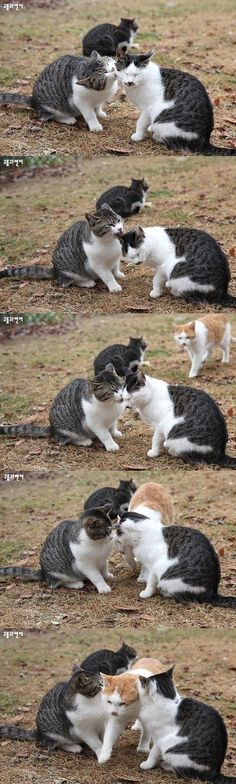 lul jealous cat