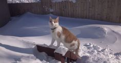 A cat plows through  of snow to get outside and play.
