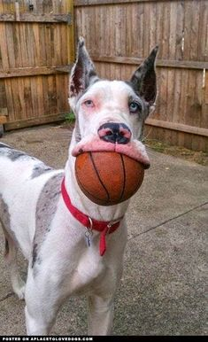 Let's go shoot some hoops.