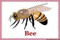 Kids Under 7: Insecten Kaarten