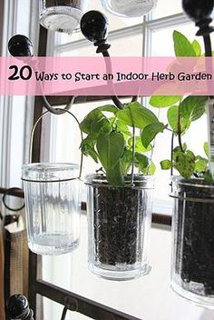 Kaila's Place| 20 Ways to Start an Indoor Herb Garden