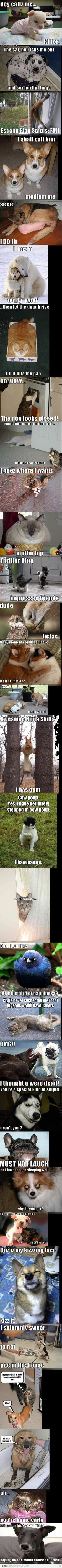 So many funny animal photos, I don't think I can take it!