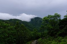 90377:   Hiking in rainy day by Alex Leung