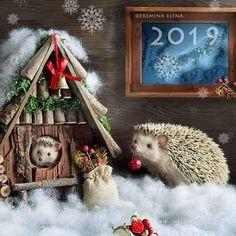 Funny Hamsters, Cute Hedgehog, First Daughter, Pet Life, Martin Freeman, New Home Gifts, Pet Birds, Mammals, Ladder Decor