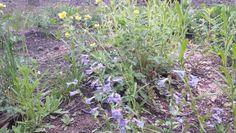 Wildflowers, Larimer County