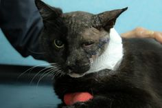Photo is of Rocky of The Magnificats-We're going to ask something we would never normally ask.  Rocky has cancer. He has been diagnosed with squamous cell carcinoma; a particularly aggressive form of cancer which has developed inside his left cheek.  On a positive note, we appear to have caught the cancer early; Rocky's jaw and lymp...
