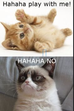 Memes For > Hahaha No Grumpy Cat