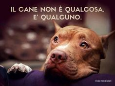 """A dog isn't """"something"""" : he's SOMEBODY"""