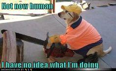 Funny #dog
