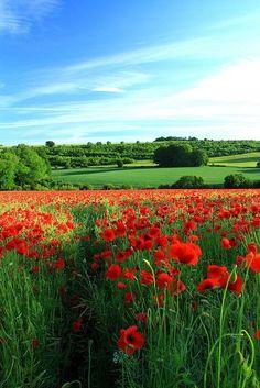 Poppy Vista 2 by kernowrules on Flickr (Gloucestershire, England)