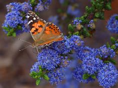 BUTTERFLIES - Yahoo Search Results Yahoo Image Search Results