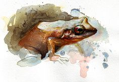 Frog by lou_pimentel, via Flickr