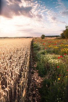 Fields and Flowers - Gloucestershire, UK - Favourite of Summer 2015 Giclée Prints by Frederick Ardley: Shop.freddieardley.com