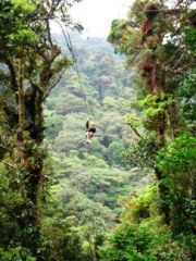 Zip-lining in a rain forest. Maybe Costa Rico.