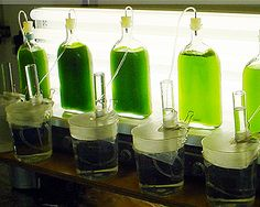 "DIY Algae/Hydrogen Kit is an art project by Future Farmers Future farmers write: ""Currently scientists are testing and generating strains of algae to determine which one most efficiently produces hydrogen in a process called ""biophotolysis"". This is an exciting sector of research, but most of the activity takes place under highly controlled environments in laboratories within universities"". Future Farmers decided to create a ""backyard/DIY"" model which would allow people (not only scientists)…"