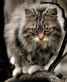 Monde merveilleux d' animaux (Lubię koty) - via: mademoisellearielle: - Imgend