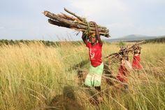 """""""El grado de deforestación convertirá a Zimbabwe en un desierto en solo 35 años si no se ofrecen soluciones pragmáticas con urgencia, y también si la gente sigue arrasando los árboles para conseguir leña sin regulación"""""""