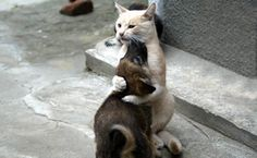 l-amour-des- animaux (9)