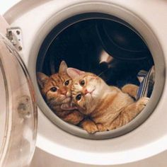 Never leave your dryer open unattended, especially a gas dryer. To many cats are injured and killed in dryers every year. If it develops a gas leak, your cat could die.