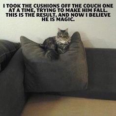 MAGIC CAT!