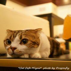 本日のお猫様。http://t.co/QxIELwOo
