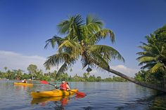 #Kayaking the #backwaters of #Alleppey