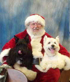 A Scottie / Westie Christmas