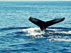 Iceland Break with Northern Lights & Whale Watching Tours