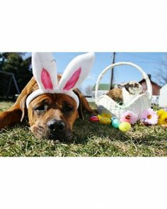 """See the """"Dreaming of Easter"""" in our  gallery"""