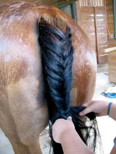 Horse Braid by elizabethnovak.deviantart.com