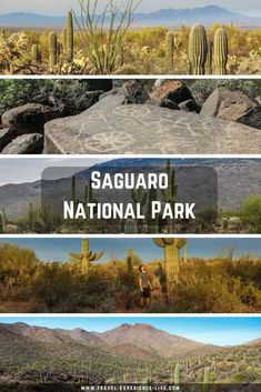 Saguaro National Park, Arizona Desert Botanical Garden, Botanical Gardens, Best Hikes, Travel Pictures, Travel Pics, Adventure Awaits, Best Vacations, Day Trip, Vacation Spots