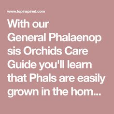 With our General Phalaenopsis Orchids Care Guide you'll learn that Phals are easily grown in the home and stay in bloom for a very long time.