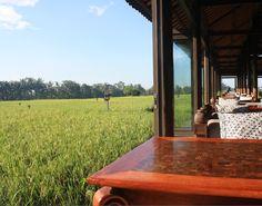 Rice paddy trekking with your private butler at The Chedi Club at Tanah Gajah #Bali #resort