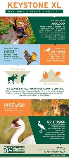 NWF-KeystoneXL-Wildlife-Impacts