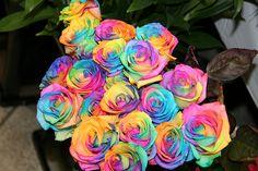 pastel rainbow roses - Google Search