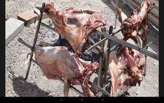 Goats, Moose Art, Animals, Animales, Animaux, Animal, Animais, Goat