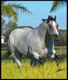 American Quarter Horse, Horse Photos, Beautiful Horses, Animals, Life, Horses, Pretty Horses, Pictures Of Horses, Animales