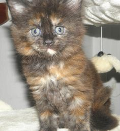 obrázky phat kočička
