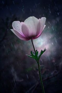 ~~Alone in Rain.. | anemone | by Makis Bitos~~