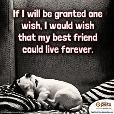 """If I will be granted one wish, I would wish that my best friend could live forever."""