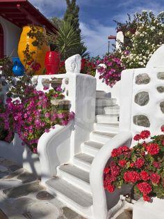 Stairs and Flowers, Chora, Mykonos, Greece Photographic Print by Adam Jones at Art.com
