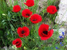 DSC07814 | Flickr - Photo Sharing! ebruzenesen - esengül inalpulat