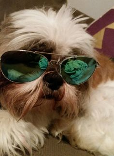 Duduma Premium Classic Sunglasses with Metal Frame Protection Mirrored Aviator Sunglasses, Round Sunglasses, Funny Sunglasses, Funny Images, Lens, Smoke, Amazon, Frame, Clothing